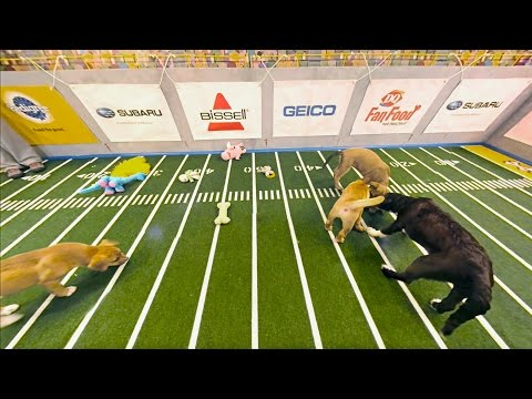 360 Degree View of Puppy Bowl.  Puppies Everywhere!