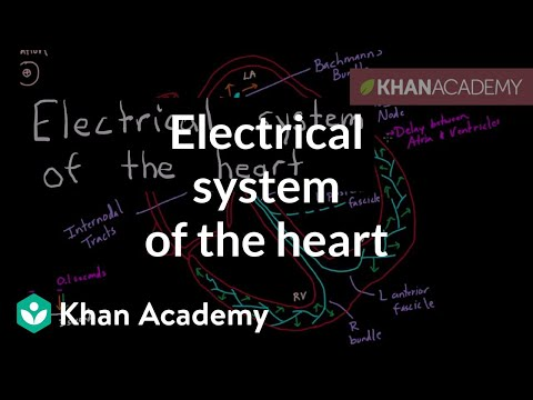 Electrical System Of The Heart Video Khan Academy