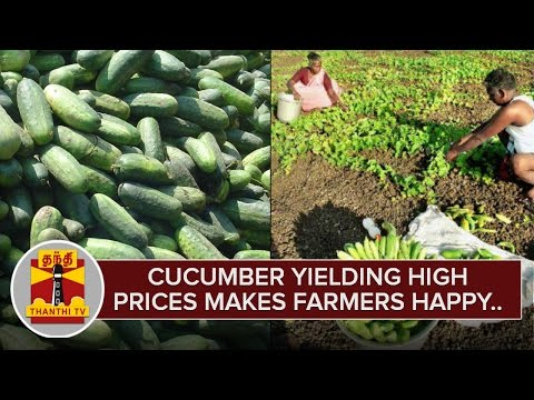 Cucumber-yielding-high-prices-makes-Farmers-happy-Thanthi-TV