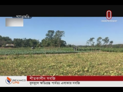 Vegetables in CHT region damaged by Bulbul (08-12-2019) Courtesy: Independent TV