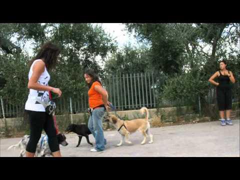 lezioni di gruppo effettuate con i cani ospiti del rifugio della Lega Nazionale per la Difesa del Cane.
