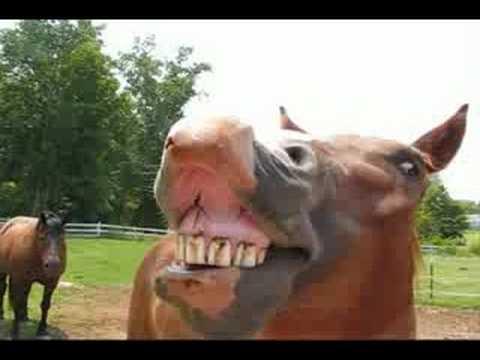 """סוסים שרים """"יום הולדת שמח"""""""