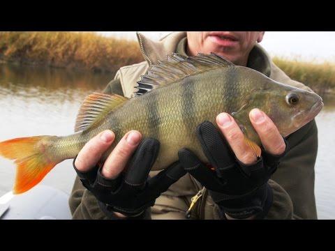 рыбак рыбаку про окуня