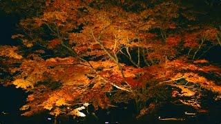 御船山楽園の紅葉[Hi-res/4K SAGA]
