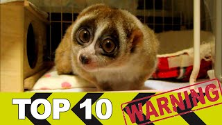 Video TOP 10 Roztomilých zvířat, která vás mohou zabít MP3, 3GP, MP4, WEBM, AVI, FLV Agustus 2017