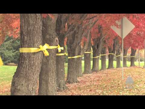 Yellow Ribbons for Veterans at UIS