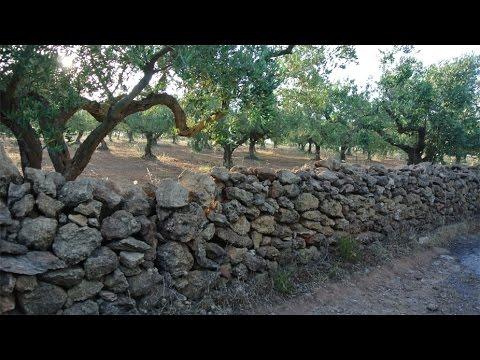 Nocellara del Belice Olives and Olive Oil