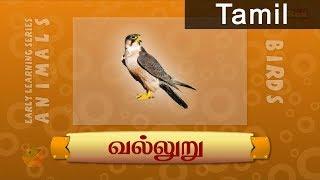 Birds - Falcon - Pre School - Animated