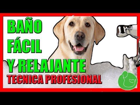 Cómo Bañar a mi Perro en Casa (TÉCNICA PROFESIONAL MUY FÁCIL)