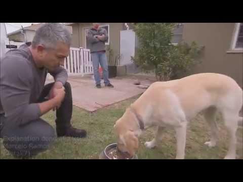 Zachowanie psa chwilę przed atakiem i po  analiza