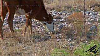 Brownfield (TX) United States  city images : Brownfield, Texas - Black Gold, Ranches and Cotton - YouTube Travel