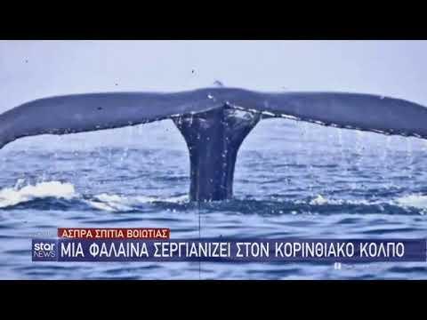 Φάλαινα εμφανίστηκε στον Κορινθιακό Κόλπο – Είχαν προηγηθεί και καρχαρίες (Video)