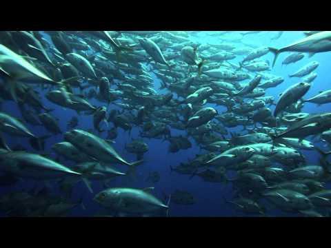 Duiken bij het Cocos Island