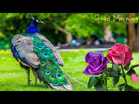 Thank you quotes - Good Morning video, Beautiful Whatsapp status, Wishes/Greetings/quotes/SMS/Gif/Messages video