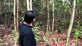 The Green Path Sama Jaya Nature Reserve