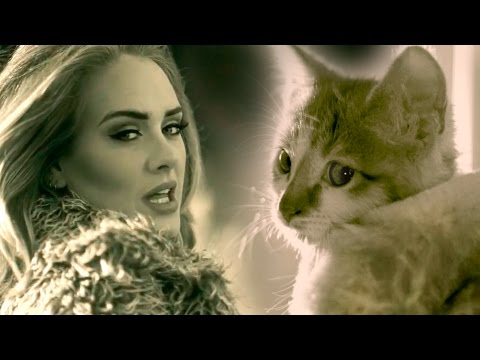 Meow Adele s Hello Parody with Kittens