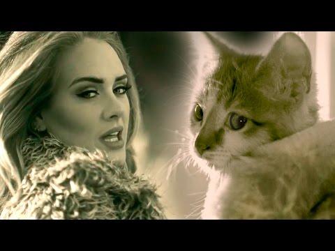 Meow Adele s Hello Parody with Kittens