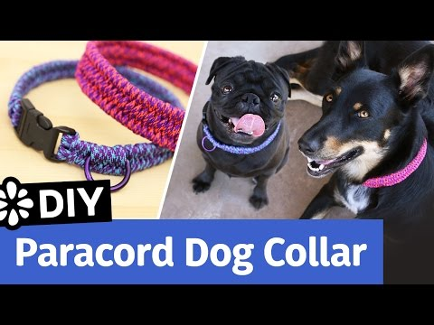 DIY Paracord Dog Collar   Small, Medium, Large Size   Sea Lemon