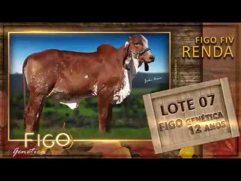 LOTE 07 - FIGO FIV RENDA