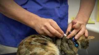 ADVANCE Kitten Care - Prevention And Treatment Of Fleas