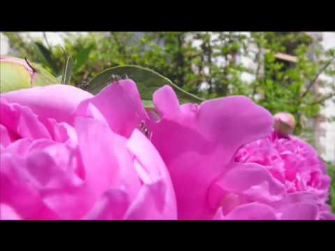Youtube Video 7OoPM-1GbpU