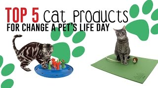 Top 5 Cat Products For Change A Pet's Life Day