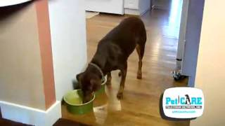 Kidney Disease in Pets