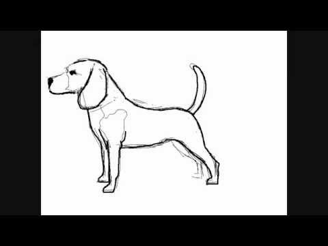 Hunde zeichnungen : Beagle – Online Zeichnen Lernen
