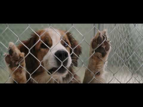 A Dog's Purpose | Film Clip 4 | Thai sub