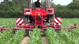 Video Wsiewki w kukurydzę – jak to działa! MP3, 3GP, MP4, WEBM, AVI, FLV November 2017