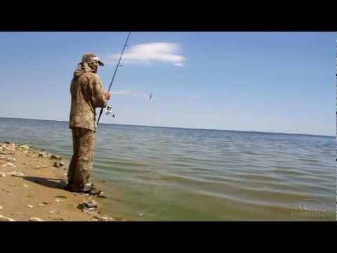 прогноз клева рыбы в волгоградской области вертячий