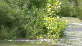 The Wild and Scenic River.wmv