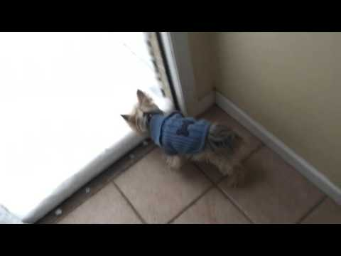 JUST FOR FUN: Check out this dog's reaction to snow