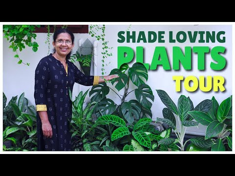 Shade Loving Plants | Garden Tour