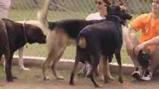 Ceasar At Dog Park 3