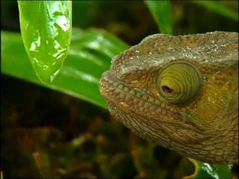 Tendres monstres - reptiles & amphibiens de Madagascar