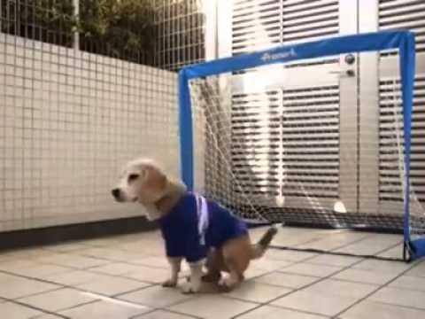 cani divertenti: il cane portiere che le para tutte