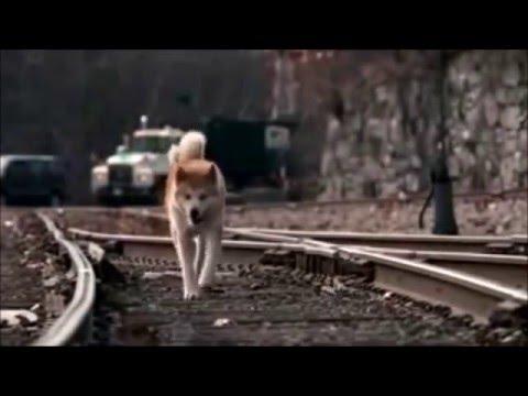 HACHIKO BİR KÖPEĞİN HİKAYESİ  Richard Gere TÜRKÇE DUBLAJ (видео)