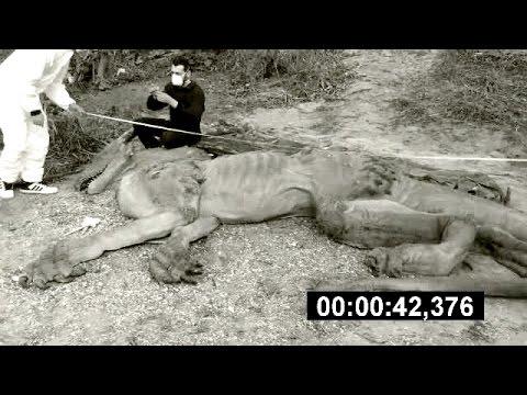 "Video - ""ΣΟΚ""! Δράκος έπεσε από τον ουρανό στο Θιβέτ! (Βίντεο)"
