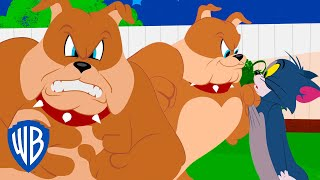 When Tom's not facing off against Jerry, he's avoiding the wrath of Spike! WBKids is the home of all of your favorite clips featuring...