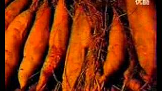 日本を救ったサツマイモ~青木昆陽・飢きん救済に挑む~
