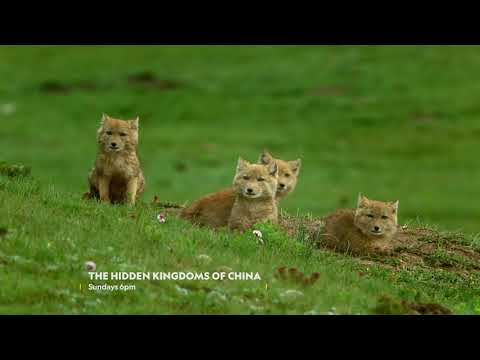 The Hidden Kingdoms Of China on National Geographic WILD | Virgin Media