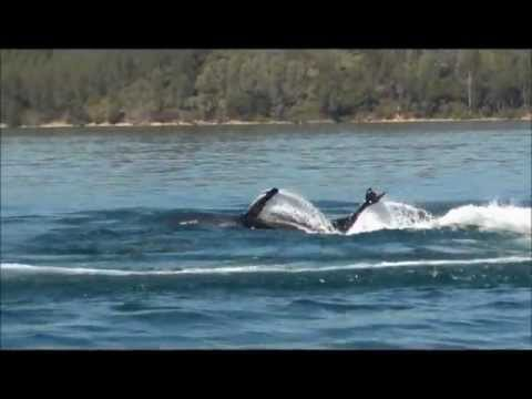 Killer Whale Seabreacher Watercraft