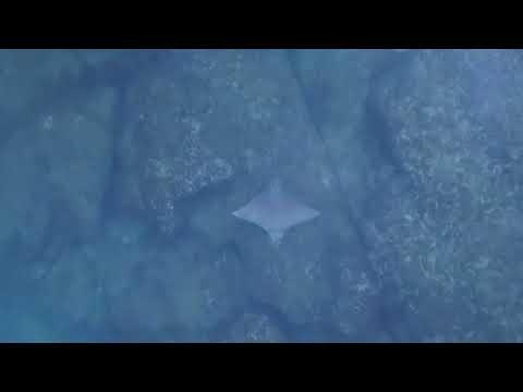 العرب اليوم - بالفيديو: طائرة دون طيار ترصد لحظة هروب سمكة من قرش