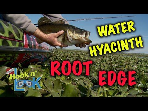 Water Hyacinth Root EdgeWater Hyacinth Root Edge<media:title />
