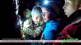 Auf den Spuren der Fledermaus  Nachtwanderung für Kinder