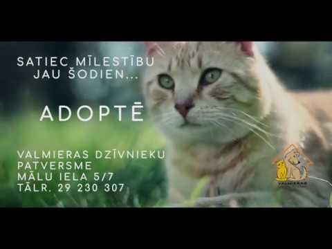 Atrodi mīlestību - adoptē!