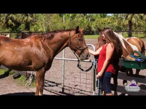 Hidden Palms Ranch Horseback Trail Rides