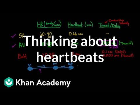 Thinking about heartbeats (video) | Khan Academy