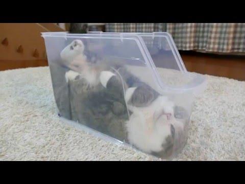 他在家中拍到喵星人躺在塑膠盒裡時已經在憋笑,再上前拍到牠的臉部特寫…笑死了啦!